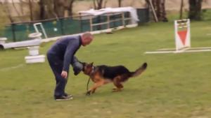 Ce dresseur s'en prend violemment à un chien lors d'un exercice