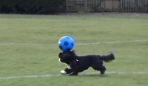 Ce chien est meilleur que Messi et Ronaldo en foot