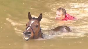 Ils risquent leur vie pour sauver des chevaux piégés dans une rivière en crue