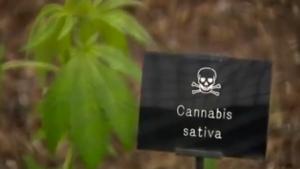 Le jardin empoisonné contenant les plantes plus toxique du monde