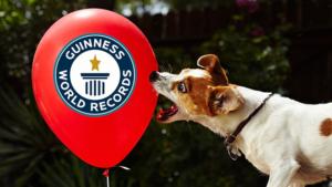 Record du chien le plus rapide à exploser 100 ballons