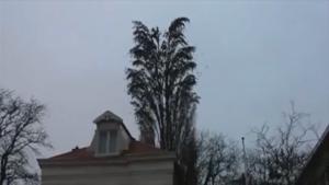 Un arbre d'une particularité que vous n'avez surement pas encore vue!
