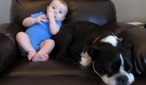 Un bébé en train de pousser fait fuir un chien