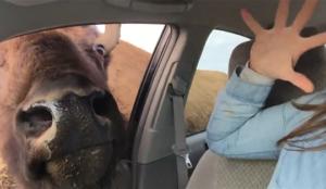Un bisou qui veut rouler une pelle ?