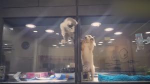 Un chaton a envie d'aller voir son pote le chiot et va tout tenter!