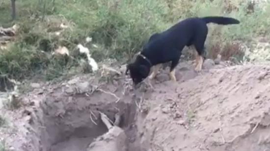 Un chien enterre son ami, geste touchant !