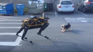 Un chien rencontre le chien robot de Boston Dynamics
