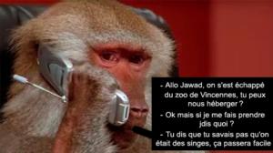 Des babouins s'échappent du zoo et Twitter se déchaîne