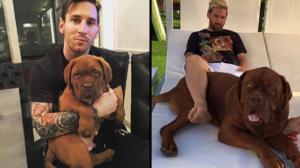 Le chien de Messi bientôt plus grand que son maître?