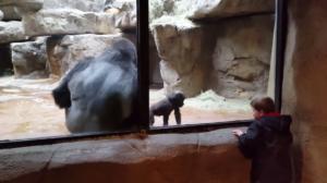 Quand un bébé gorille et un enfant joue ensemble à travers la vitre du zoo