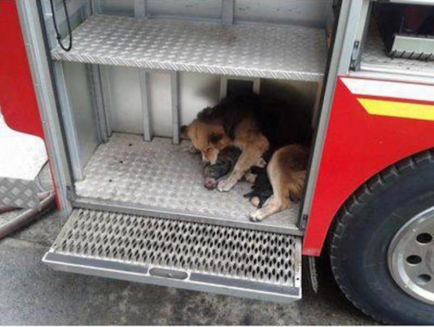 Une chienne courageuse suit son instinct et sauve ses chiots d'un incendie