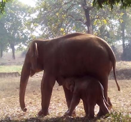Une mère creuse pour sauver son bébé