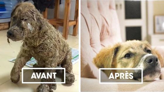 Pascal, le chien recouvert de colle puis sauvé par des vétérinaires