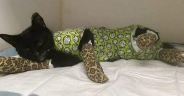 Flandre, un chat mis au four à 200 degrés pendant 15 minutes par ses bourreaux