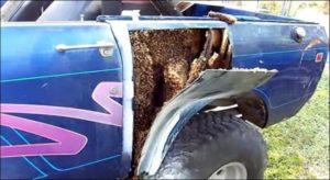 Il découpe la tôle de sa voiture et y découvre un nid d'abeilles !