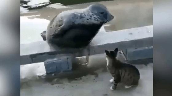 Un chat met un phoque KO