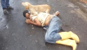 Ce chien protège son maître ivre endormi au milieu de la route