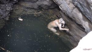 Ils sauvent la vie d'un chien tombé dans un puits et sur le bord de se noyer