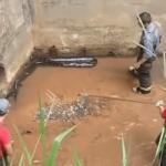 Un énorme anaconda découvert dans une canalisation par des ouvriers