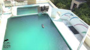 Un pauvre dauphin abandonné dans un parc aquatique qui a fermé
