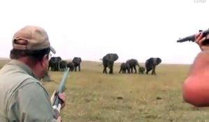 Ces chasseurs tuent un éléphant et se font foncer dessus par le troupeau en colère