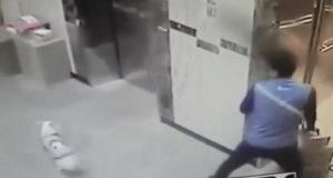 Un livreur sauve un chien qui allait se faire pendre par un ascenseur.