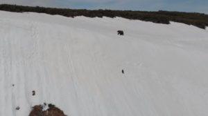 Un ourson adorable tente de rejoindre sa maman et glisse sur une montagne enneigée (Russie)