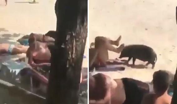 Alors qu'elle se bronze sur la plage, cette femme a une petite surprise
