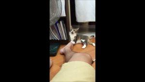VIDÉO : Ce chat se moque des pieds puants de son maître