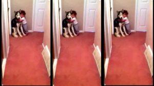 Le bruit de l'aspirateur effraye ce bébé il se blottit contre le chien