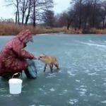Un renard sauvage tente de voler les poissons de ces pêcheurs russes