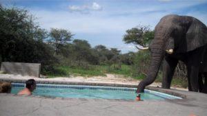 Cet éléphant assoiffé vient prendre une gorgée dans la piscine sous les yeux des touristes