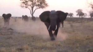 Un éléphant attaque des touristes de safari et retourne et détruit leur Jeep