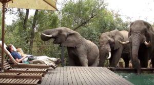 Des touristes restent immobiles face à un groupe d'éléphants en train de boire dans la piscine de leur hôtel