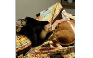 Ce singe met sa main dans le cul de ce pauvre chien endormi
