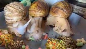 Il filme des escargots qui mangent dans une assiette !