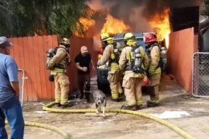 Il risque sa vie pour sauver son pit-bull dans sa maison engloutie par les flammes