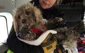 Ils sauvent en hélicoptère un chien disparu dans la neige depuis 48 heures