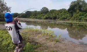 Un crocodile vole un poisson à des pêcheurs terrifiés