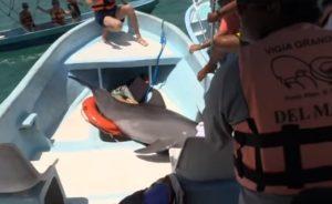 Un dauphin saute dans un bateau rempli de touristes au Mexique
