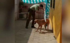 Un policier vient libérer un chien qui pleure pris au piège dans le tissu d'un auvent