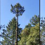 Un élagueur grimpeur a eu une belle frayeur au sommet d'un arbre