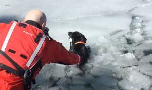 Chien sauvé d'un lac glacé après avoir été coincé pendant cinq jours