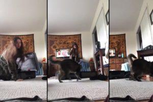 Un chat attaque sa maîtresse avec ses griffes en sortant d'une valise