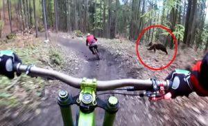 Un ours poursuit des cyclistes dans un parc à vélos en Slovaquie