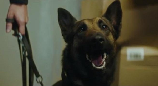 La revanche d'un chien policier dans un aéroport