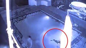 Un alligator attaque un couple dans une piscine d'un hôtel
