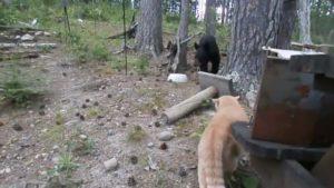 Un chat attaque un ourson qui se réfugie dans un arbre