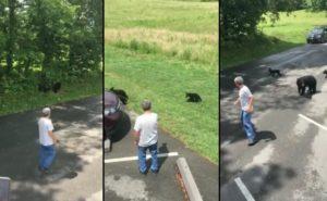 Un homme irresponsable s'est fait charger par une mère qui traverse une route avec ses petits