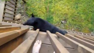 Un homme voit un ours sur la rambarde d'un balcon